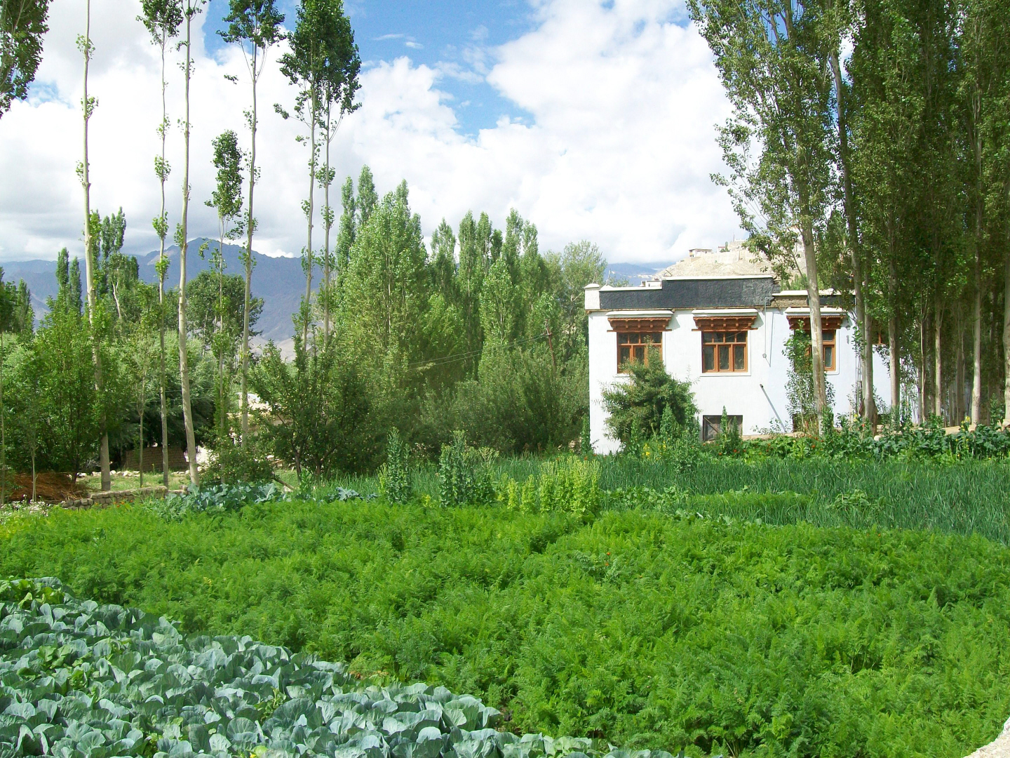Buddhist Ladahki Home with garden - Leh, Ladakh - India